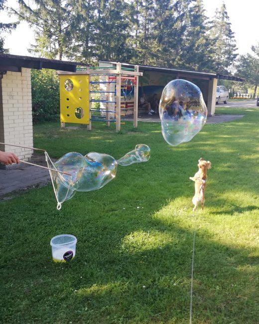 Milžiniški burbulai Dauparuose